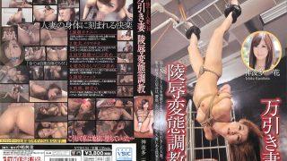 NTRD-054 Kamihata Ichika, Jav Censored