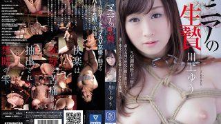 AVOP-355 Sacrifice Of Mania Yu Kawakami