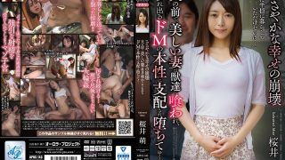 APNS-143 A Modest Fall Of Happiness In Front Of Her Husband A Beautiful Wife Is …